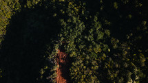 aerial view over trees in a forest
