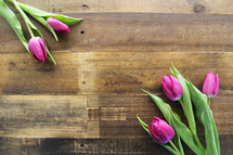 Purple tulips laying on a wooden surface.
