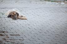 resting stray dog