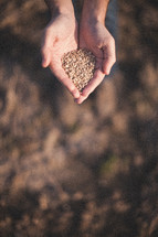 hands full of seeds