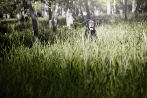 a dog in a field of grass