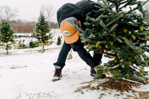 man cutting down a Christmas tree