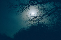 Moon behind the trees and the mist