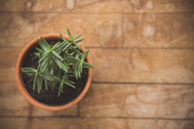 potted succulent plant on wood floor