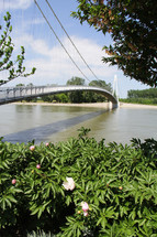 a bridge over a river and flowering plants along a shore