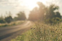 dirt road and sunlight