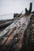 wet driftwood washed onto a shore