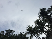 airplane in the sky over palm trees
