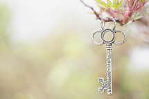 Silver key hanging from a twig.