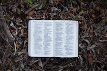 open Bible lying in fall leaves on the ground