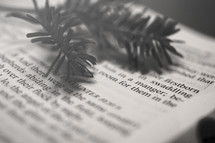 pine needles on the pages of a Bible