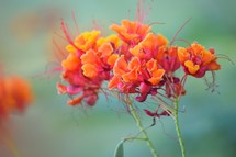orange and fuchsia flowers against a turquoise background in nature in Nevada in October