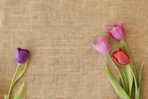 Tulips on burlap.