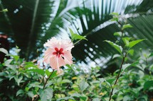hibiscus flower and tropical plants