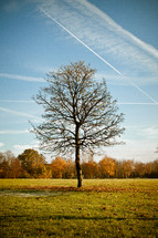 isolated tree in a field - fall
