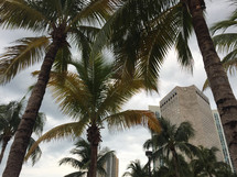 city buildings and palm trees