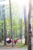 hammock under the trees in a forest
