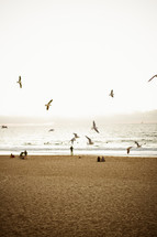 seagulls in flight at the beach