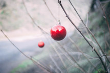 red ornaments on a  branch