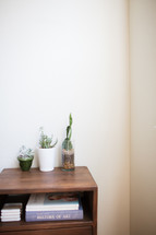 potted plants on an end table