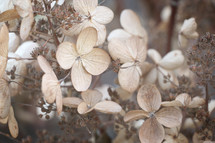 dried brown flowers