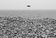 pebbles on a beach shore