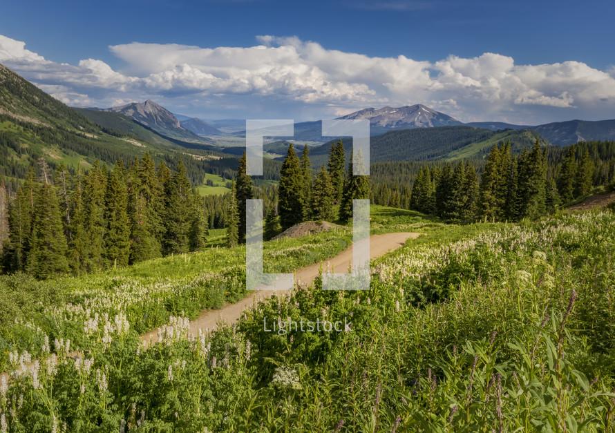 path through a meadow