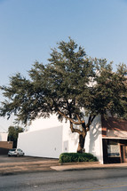 tree and bush in front of a white building