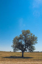 single tree on a field