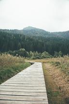 a long narrow boardwalk