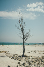 bare tree on a beach