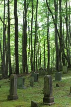 Old headstones in a cemetery surrounded by tall trees.