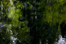 reflection of green trees on water