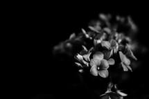 Minimal black texture background close-up flowers
