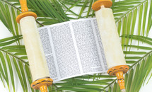 scroll on palm fronds on a white background