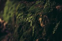 moss growing on the edge of rock