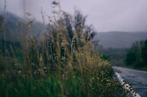 tall grasses on the side of a road