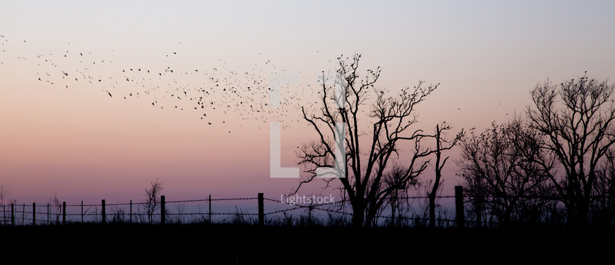 flock of birds at sunset