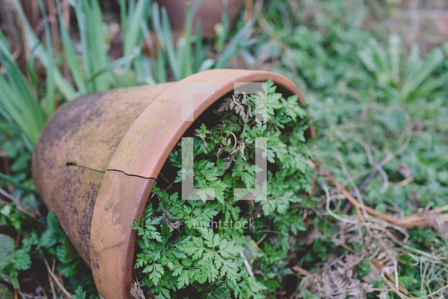 green plant in a cracked clay pot