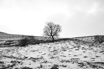 snow and an isolated tree