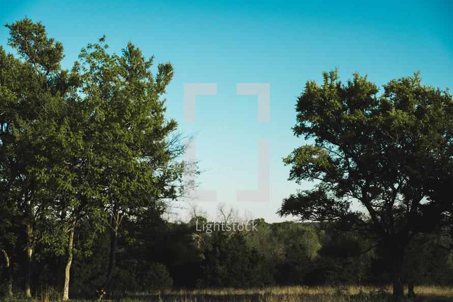 blue sky above the tree line