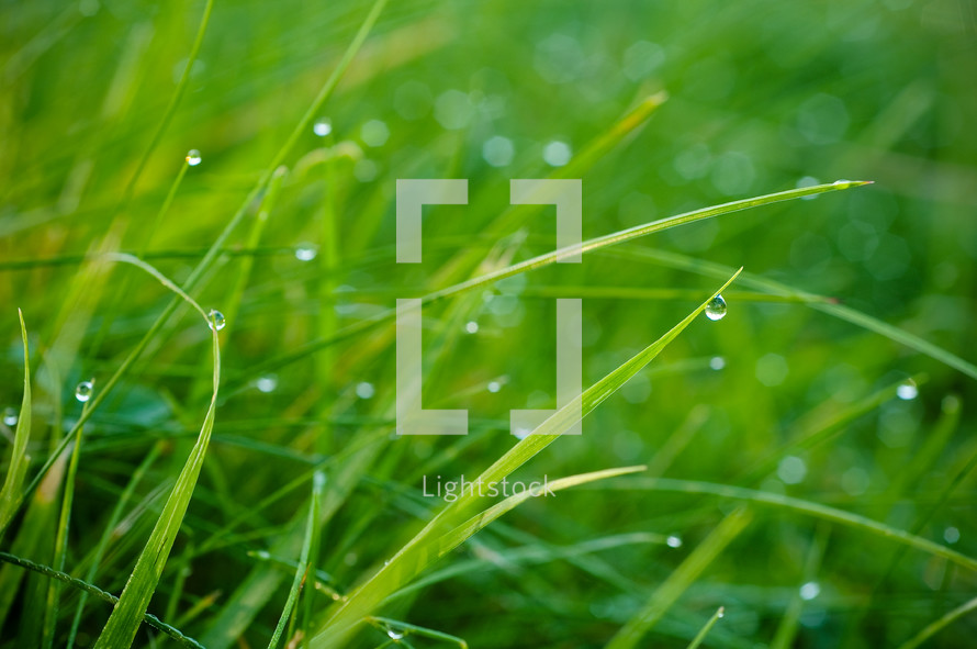 rain drops on green grass