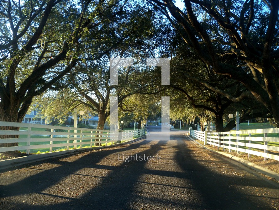 A country road surrounded by white picket fences and tall oak trees as the sunrise stretches across the fields causing long shadows along the long stretch of road ahead.
