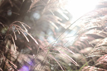 glowing sunlight on tall grasses