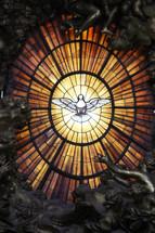 White dove representing the Holy Spirit