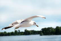 A seagull in flight over a lake.