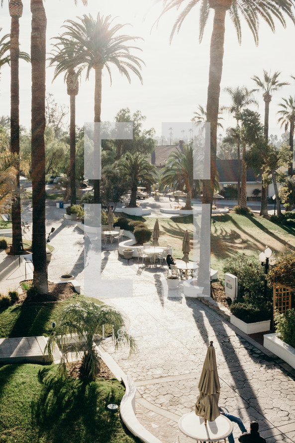 tall palm trees and outdoor courtyard