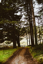 a dirt road through rural landscape