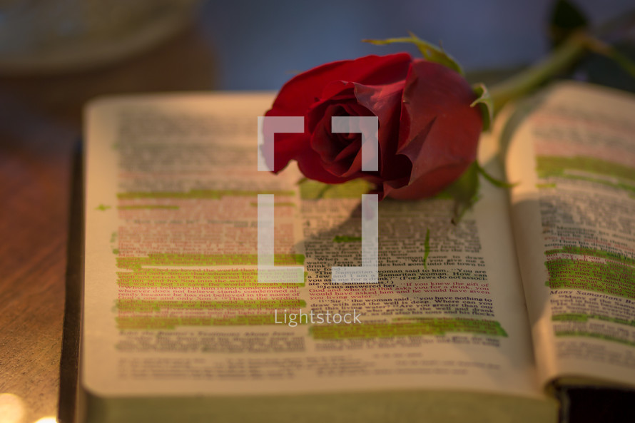 red rose on highlighted pages of a Bible