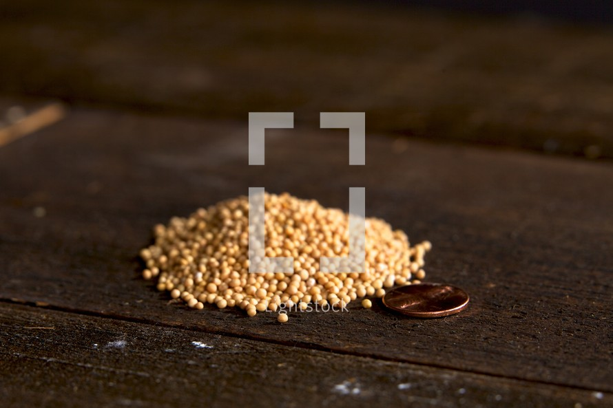 mustard seeds on wooden table with a penny to show their size